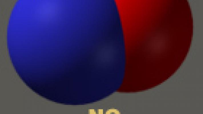 Oxyde Nitrique - NO - Nutrition Outlet