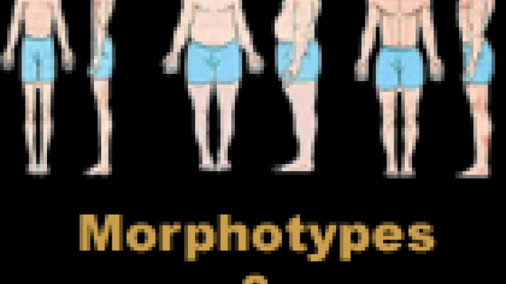 morphotypes_musculation.png